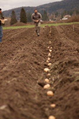Potato Planting Party